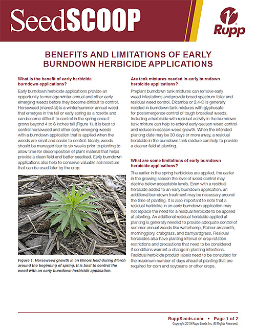 Screen shot image of SeedSCOOP publication discussing the benefits and limitations of early burndown herbicide applications.