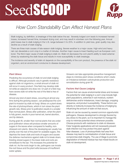 Screen shot image of SeedSCOOP publication discussing how corn standability can affect harvest plans.