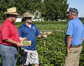 Pete, Barry and Dave evaluating green beans in the research plot.