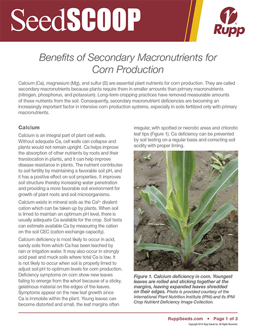 Screen shot image of SeedSCOOP publication discussing the benefits of secondary macronutrients for corn production.