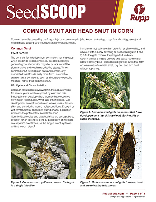 Screen shot image of SeedSCOOP publication discussing common smut and head smut in corn.
