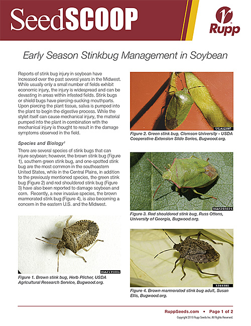 Screen shot image of SeedSCOOP publication discussing early season stinkbug management in soybean.