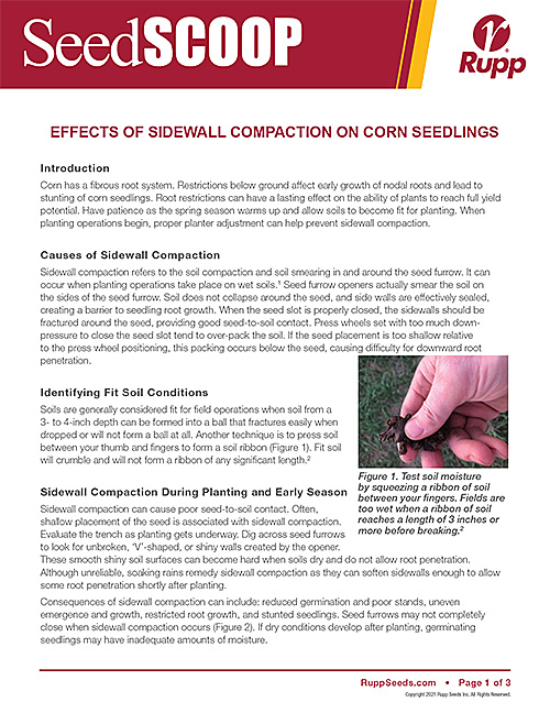 Screen shot image of SeedSCOOP publication discussing the effects of sidewall compaction on corn seedlings.