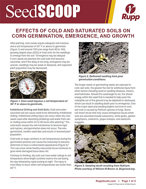 Screen shot image of SeedSCOOP publication discussing the effects of cold and saturated soils on corn germination, emergence and growth