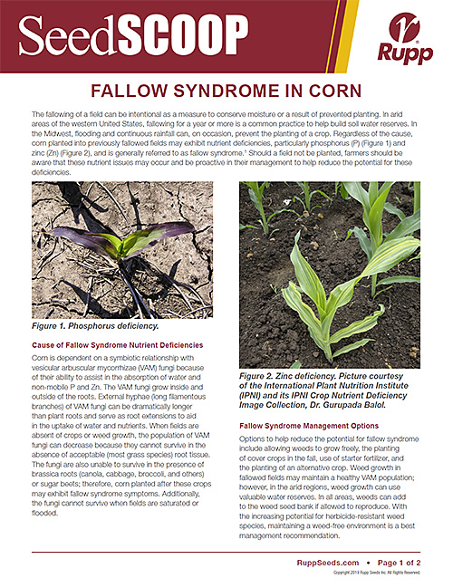 Screen shot image of SeedSCOOP publication discussing Fallow Syndrome in corn.