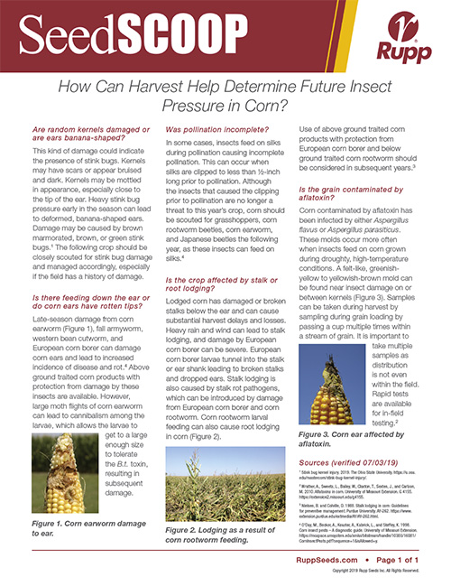 Screen shot image of SeedSCOOP publication discussing how you can use harvest to determine future insect pressure in corn.