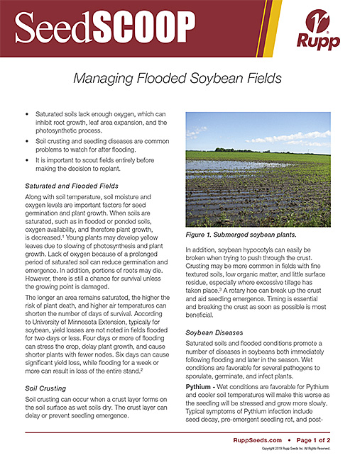 Screen shot image of SeedSCOOP publication discussing the management of flooded soybean fields.