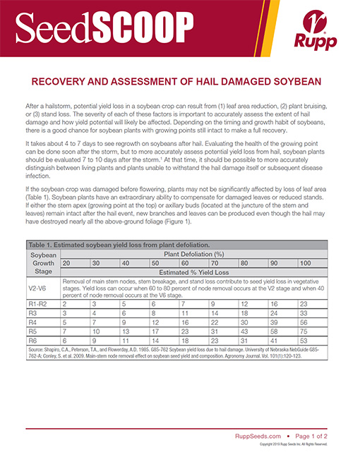 Screen shot image of SeedSCOOP publication recovery and assessment of hail damaged soybeans