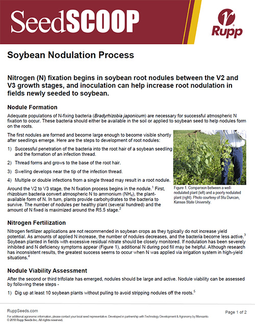 Screen shot image of SeedSCOOP publication discussing the soybean nodulation process.