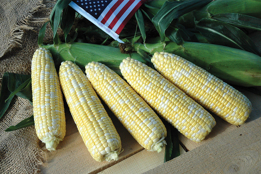Photo of American Dream sweet corn from IFSI
